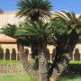Sycylia: Monreale – Chiostro