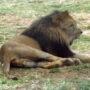 zoo_09